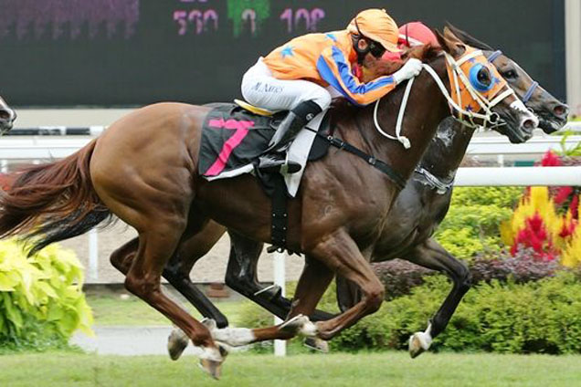 Horse-Sebrose-89760-636x424