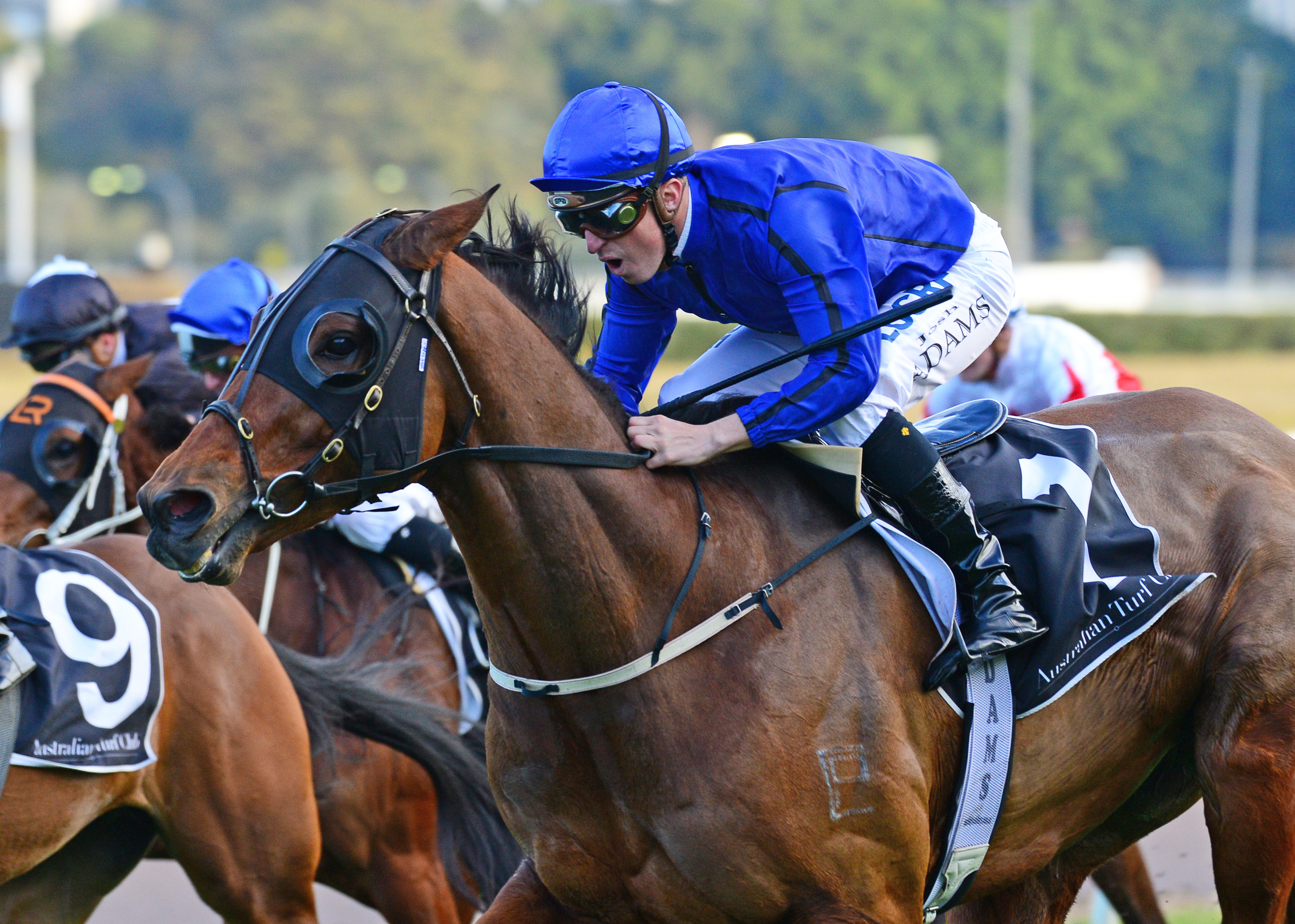 Happy Clapper wins the Tramway Stakes at Randwick.