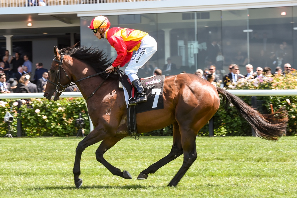 Levendi heads to barriers for the Group Three Carbine Club Stakes.