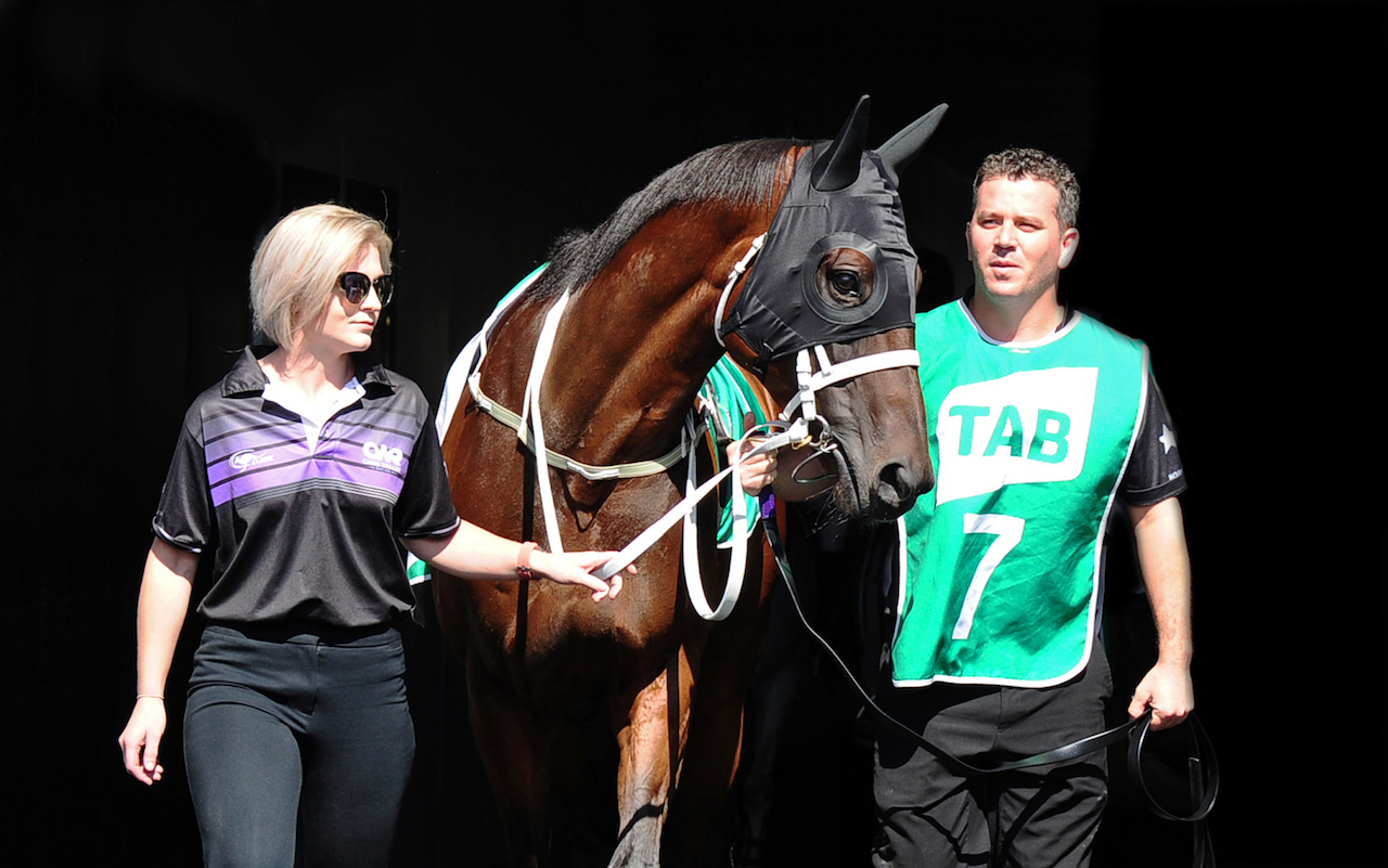 Winx parades before the Chipping Norton Stakes.