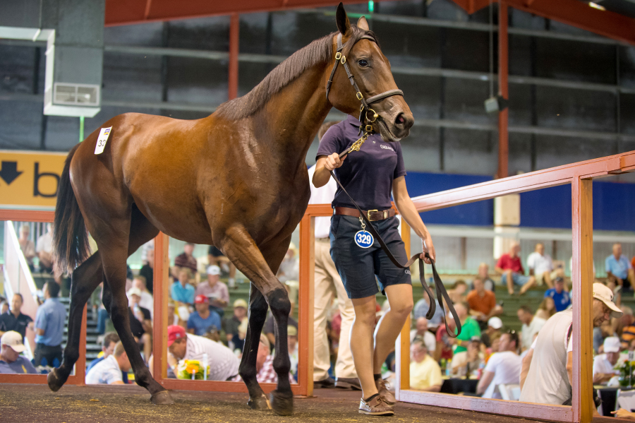 Winx when sold as a yearling at the Magic Millions Gold Coast Sale