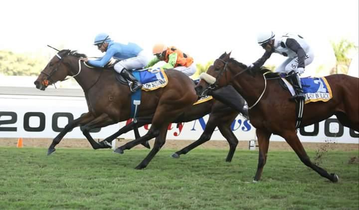 Australian bred Oh Susanna wins the Woolavington 2000 at Greyville