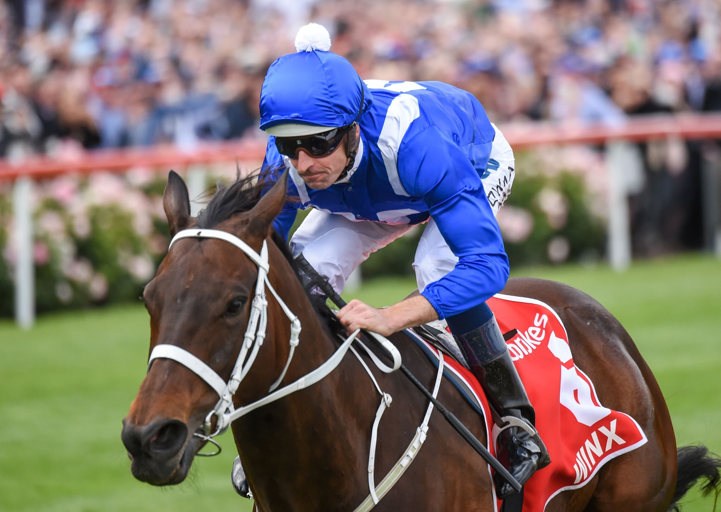 Winx passing the crowd as she wins her fourth cox plate