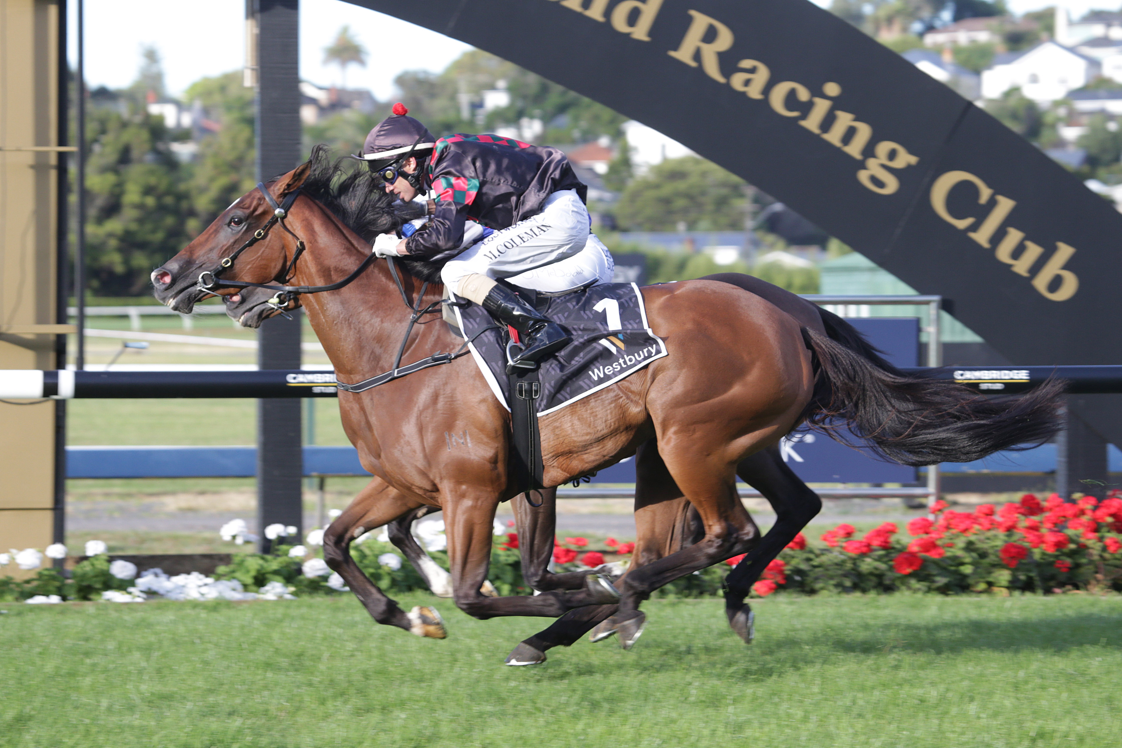 Volpe Veloce wins the Group Two Westbury Classic at Ellerslie