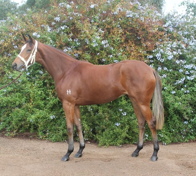 The Inglis Melbourne Gold Yearling Sale top lot, a filly by Dundeel from My Holidaze