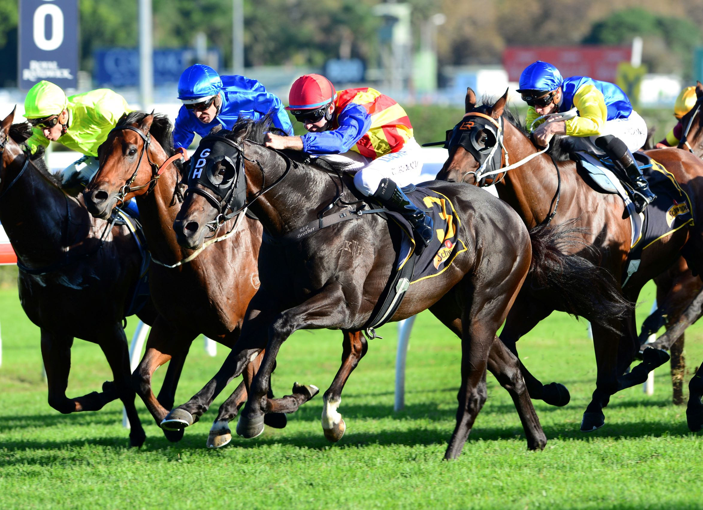 Pierata wins the Group One All Aged Stakes