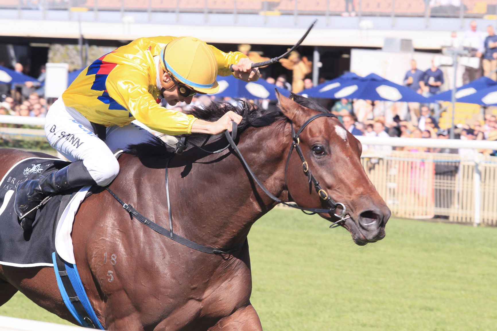 Vega One wins the Listed Suez Queensland Day Stakes